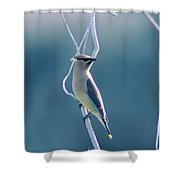 Spring Wax Wings  Shower Curtain