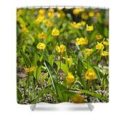 Spring Wildflowers Shower Curtain