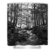 Spring Wood Shower Curtain