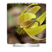 Spring Yellow Flower Shower Curtain