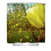 Spring. Yellow Magnolia Flower Shower Curtain