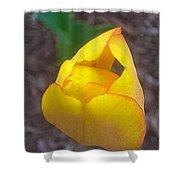 Spring Yellow Tulip Shower Curtain