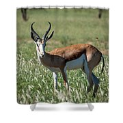 Springbuck And Butterfly Shower Curtain