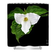 Spring's Beauty Shower Curtain