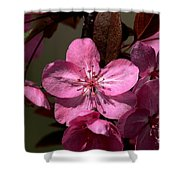 Springs Bloom Shower Curtain