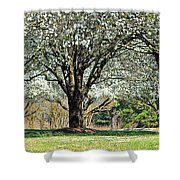 Spring's Canopy Shower Curtain