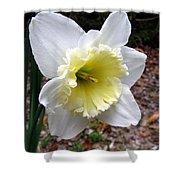Spring's First Daffodil 1 Shower Curtain