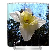 Spring's First Daffodil 2 Shower Curtain