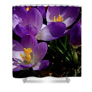 Springs First Flowers Shower Curtain