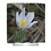 Spring's Kiss Shower Curtain