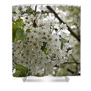 Springtime Abundance - Masses Of White Blossoms Shower Curtain