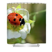 Springtime - Animals Shower Curtain