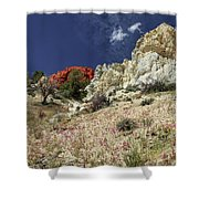 Springtime At Red Rock Canyon Shower Curtain