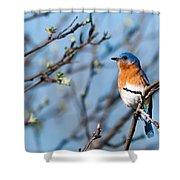 Springtime Blue Shower Curtain