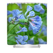 Springtime Bluebells  Shower Curtain by Lori Frisch
