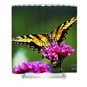 Springtime Butterfly Shower Curtain