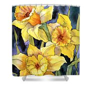 Springtime Daffodils Shower Curtain
