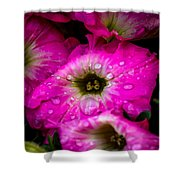 Pink Petunias Shower Curtain