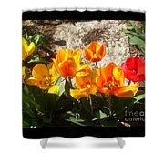 Springtime Flowers Shower Curtain by Rachel Maynard