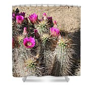 Springtime In The Desert Shower Curtain