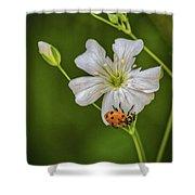 Springtime Ladybug Shower Curtain