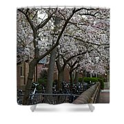Springtime On Prince George St. Shower Curtain