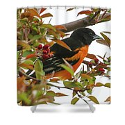 Springtime Oriole Shower Curtain