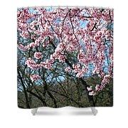 Springtime Seasonal Pink Blossom Flowers Baslee Shower Curtain
