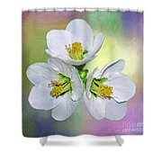 Springtime Triplets By Kaye Menner Shower Curtain