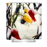 Springtime Tulips In The Snow Poster Print Shower Curtain