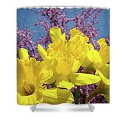 Springtime Yellow Daffodils Art Print Pink Blossoms Blue Sky Baslee Troutman Shower Curtain