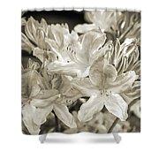 Sprint Flowers B/w 1 Shower Curtain