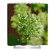 Sprouting Grapes Shower Curtain