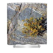 Sprouting Rock Shower Curtain