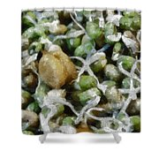 Sprouts And Other Healthy Food Shower Curtain