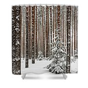 Spruce Among The Pines Shower Curtain