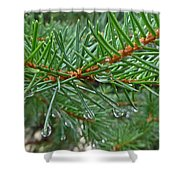 Spruce Drops Shower Curtain