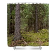 Spruce Forest  Shower Curtain