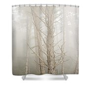 Spruce In The Fog Shower Curtain