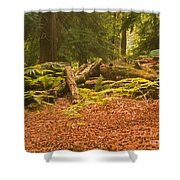 Spruce Logs Leith Hill Surrey 2014 Shower Curtain