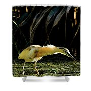 Squacco Heron On The Look Out For Fish Shower Curtain