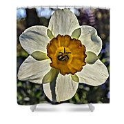 Square Daffydowndilly Shower Curtain