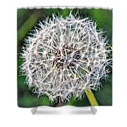 Square Dandelion 2 Shower Curtain