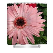 Square Framed Pink Daisy Shower Curtain