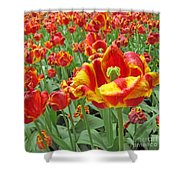 Square Yellow And Red Tulips Shower Curtain