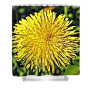 Square Yellow Dandelion Shower Curtain