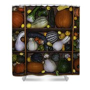 Squash And Gourds In Compartments Shower Curtain