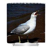 Squawk Shower Curtain by Amanda Struz