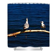 Squawk Box Shower Curtain by Amanda Struz