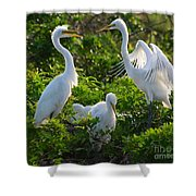 Squawk Of The Great Egret Shower Curtain